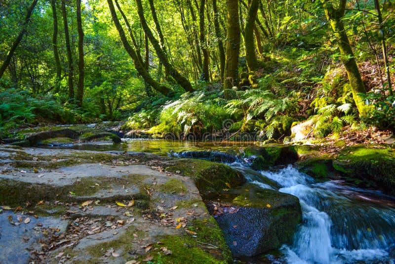Rivier die neer door rotsen in midden van een groen bos vloeien stock afbeeldingen