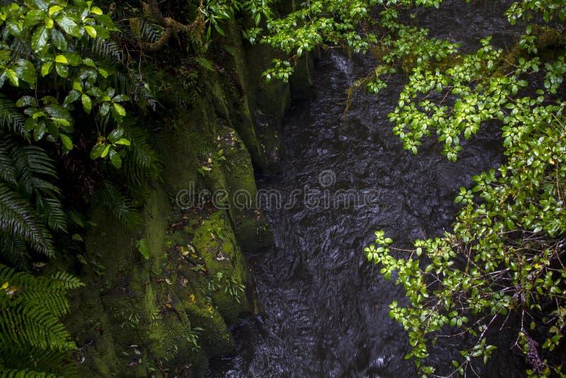 Rivier die onder rotsachtige die clifs lopen met groen mos wordt behandeld stock foto's