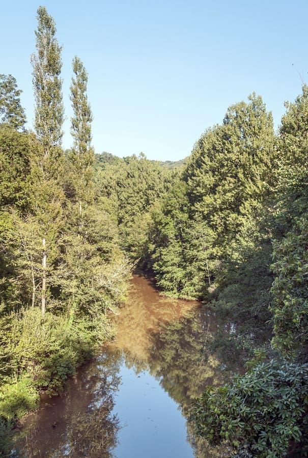 Rivier door bomen wordt omringd die stock fotografie