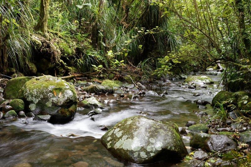 Rivier door een bos royalty-vrije stock foto