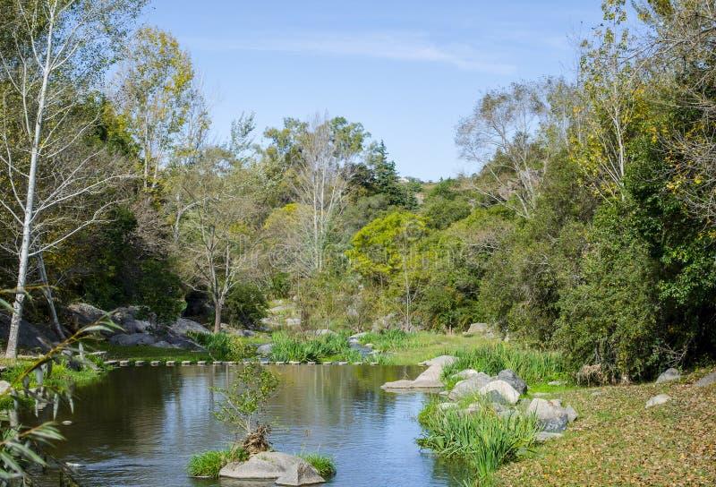 Rivier en de herfst kleurrijk bos royalty-vrije stock foto's