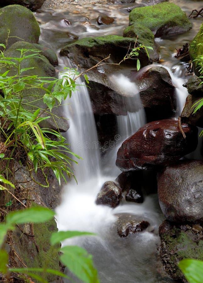 Rivier en kleine dalingen van Smaragdgroene Pool, Dominica stock foto