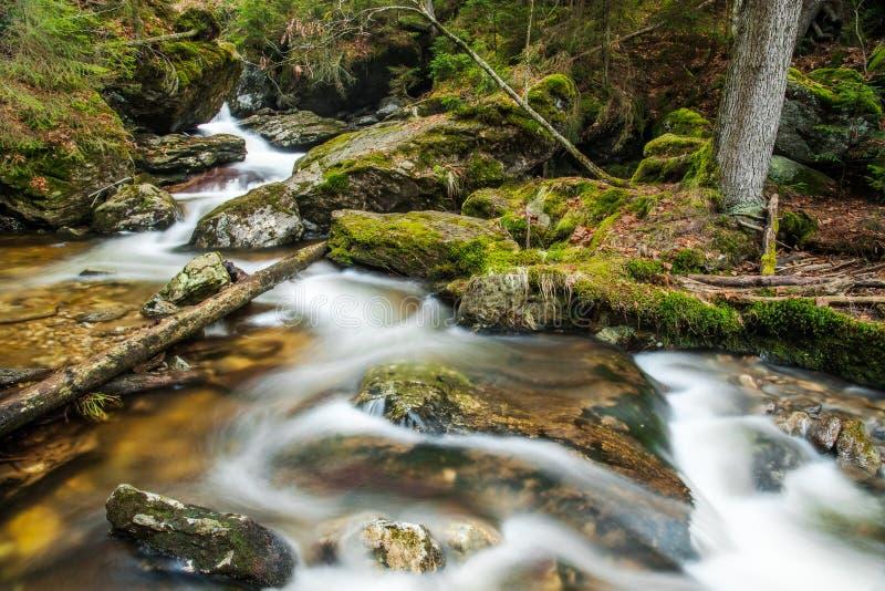 Rivier in het Beierse Bos royalty-vrije stock afbeelding