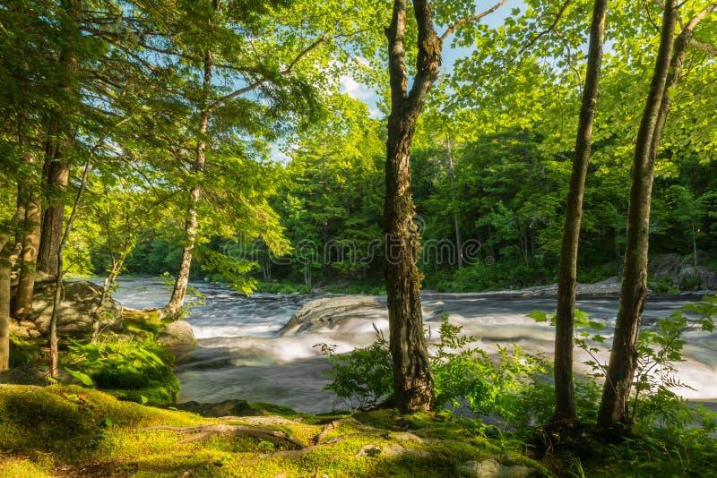 Rivier in het bos royalty-vrije stock fotografie