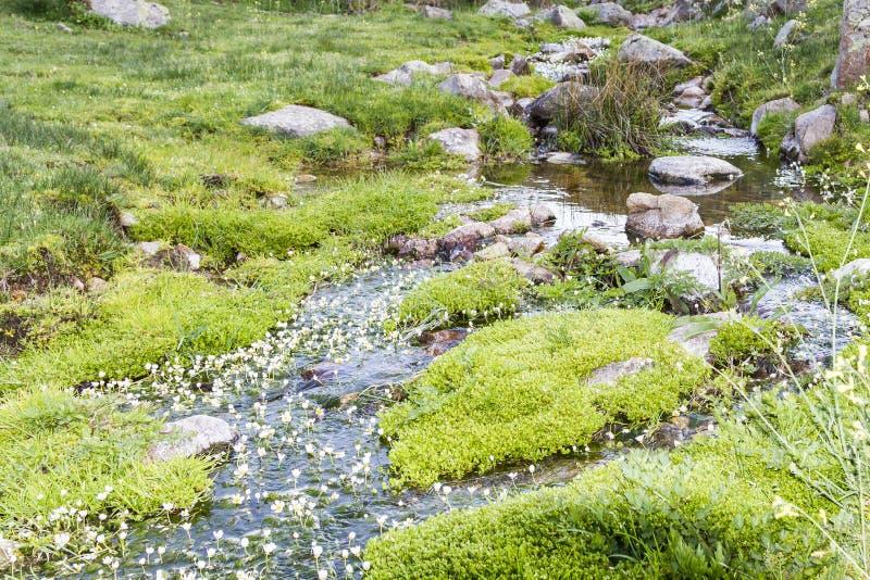 Rivier, het Meeslepen Water Stromende Textuur, duidelijke bergstroom royalty-vrije stock afbeeldingen
