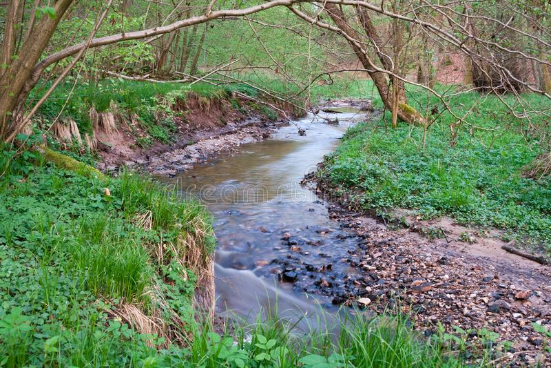 Rivier in het moerasland stock afbeelding