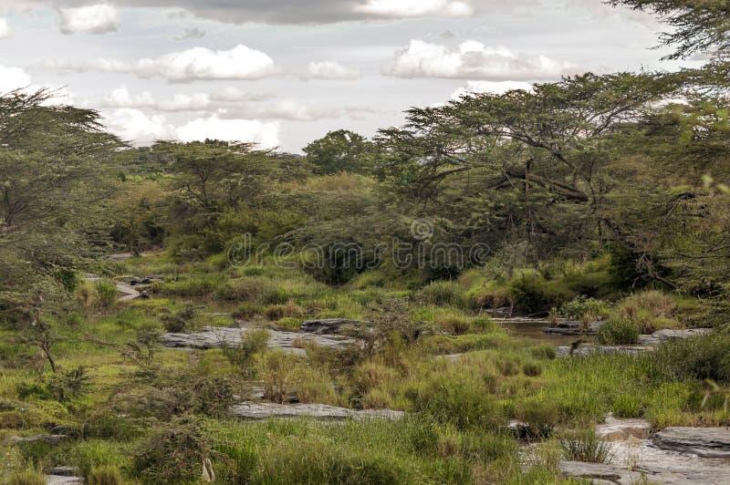 Rivier in Kenia royalty-vrije stock afbeelding