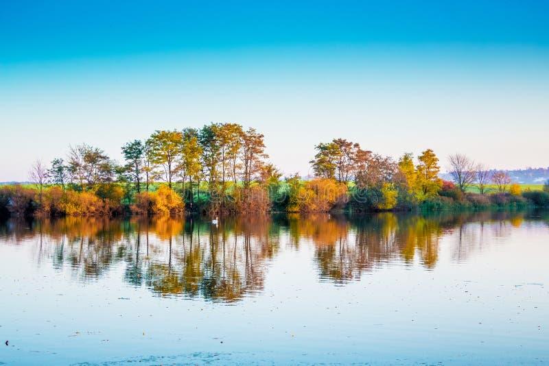 Rivier met bomen, die in schoon water, in de herfst worden weerspiegeld Zwaan die langs river_ drijven stock afbeelding