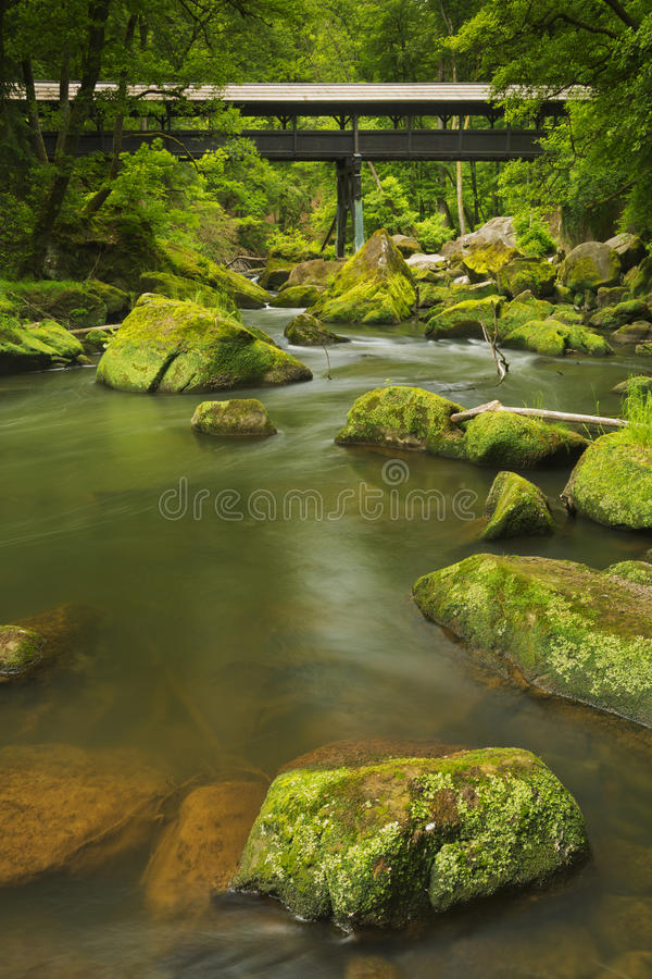 Rivier met een behandelde brug in een weelderig groen bos stock foto's