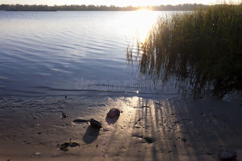 Rivier met riet en zonsopgang royalty-vrije stock foto's