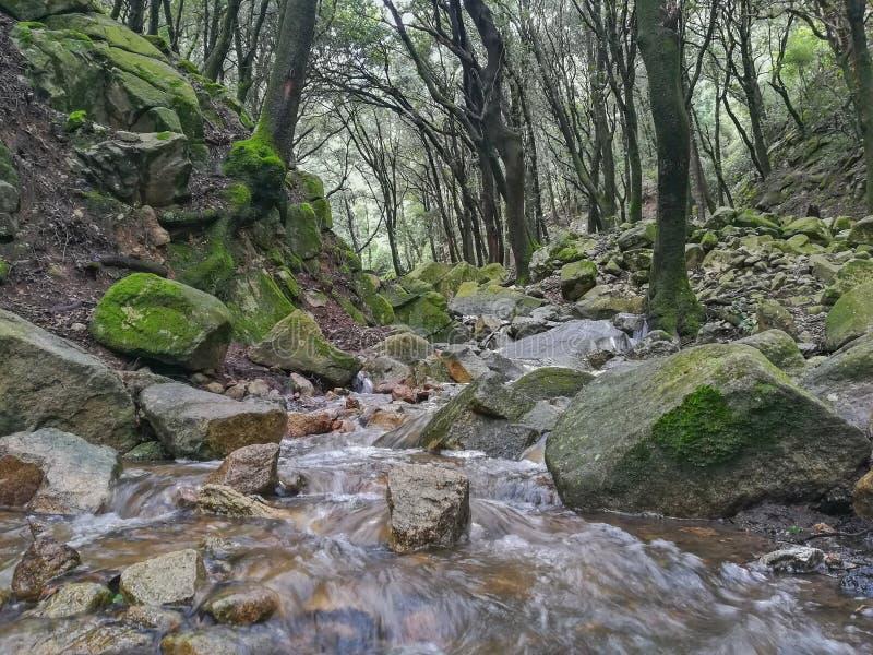 Rivier in natuurreservaat stock foto's
