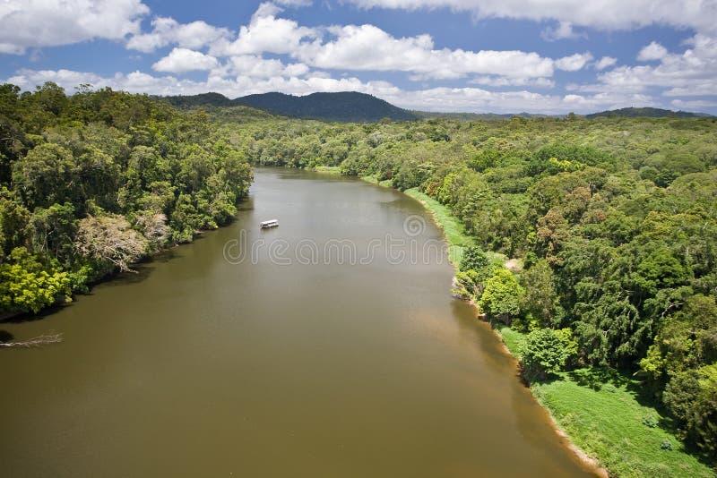 Rivier in regenwoud stock foto