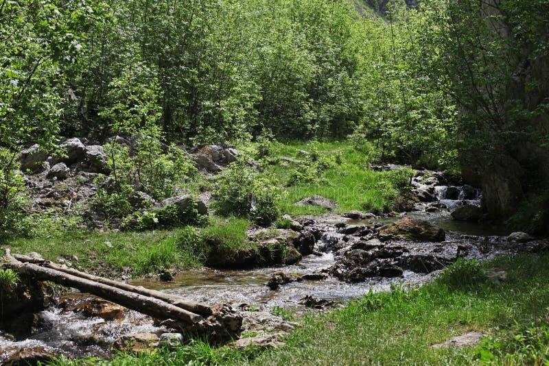 Rivier, rotsen en de lente in Cerna-Bergen, Roemenië stock foto
