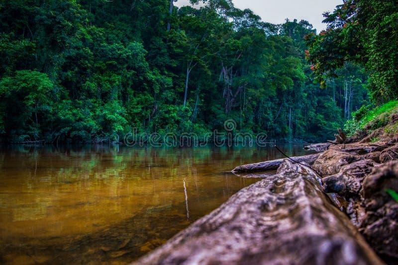 Rivier Tembeling in Taman Negara, Maleisië stock afbeelding