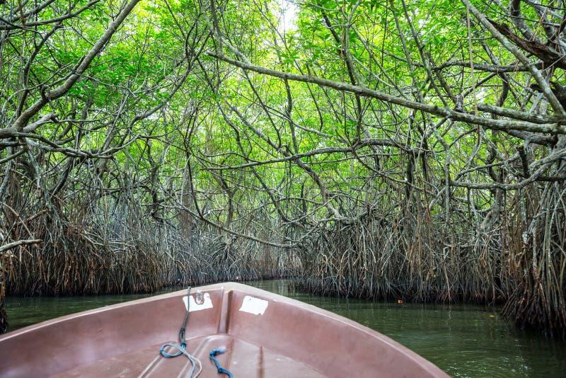 Rivier, tropische mangroven Ceylon, mening van boot royalty-vrije stock fotografie