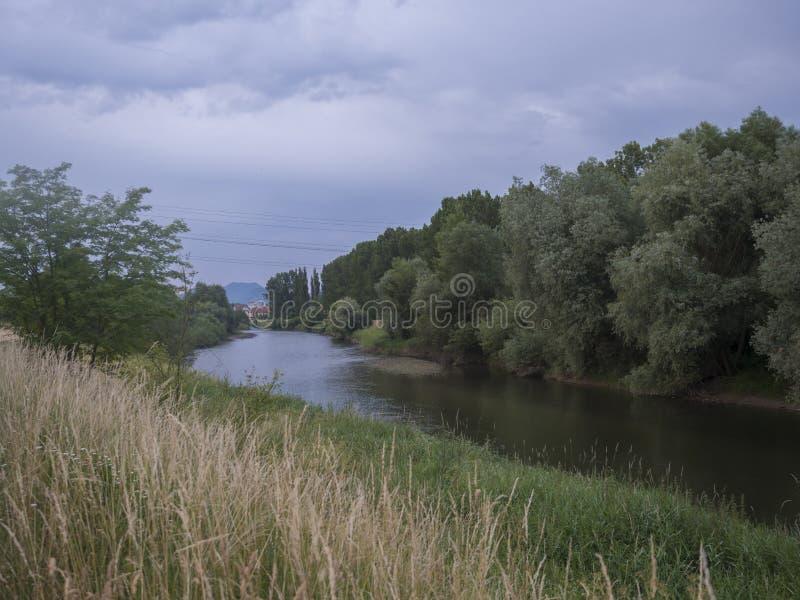 Rivier Vah met bomen, gras en riet op grenzen in Liptovsky Mikulas dichtbij Meer Liptovska Mara, Slowakije De Ochtend van de zome royalty-vrije stock foto's