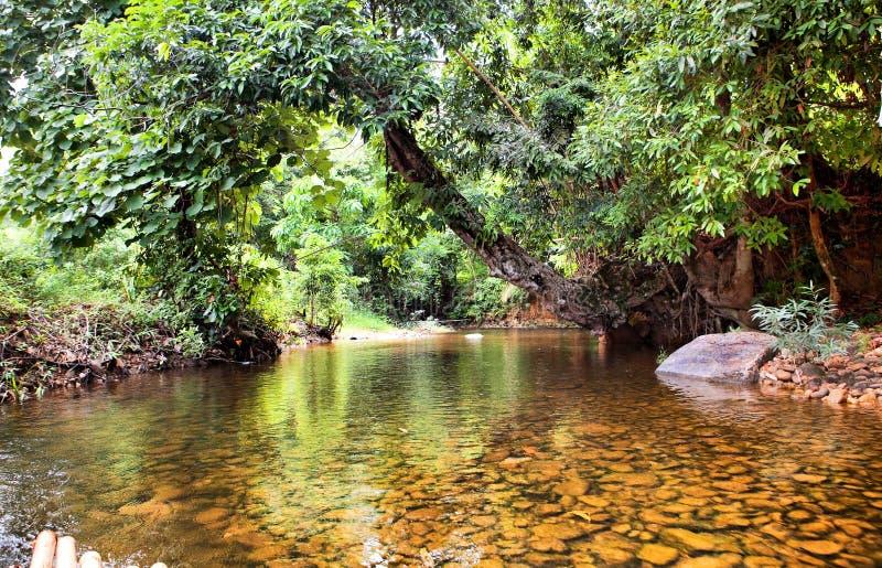 Rivier in wildernis, Thailand royalty-vrije stock foto's