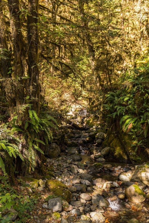 Riviera mały strumień otaczający luksusowym lasem obok Piekarnianego jeziora zdjęcia stock