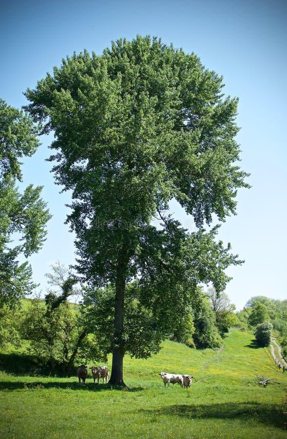 Rivieren en bomen royalty-vrije stock afbeelding