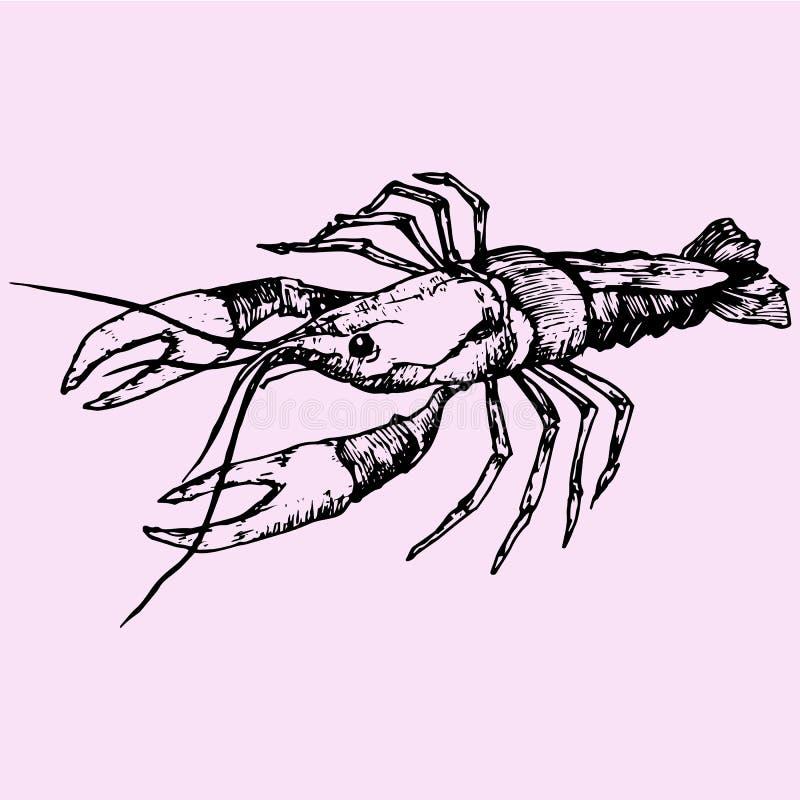 Rivierkreeftenzeekreeft vector illustratie