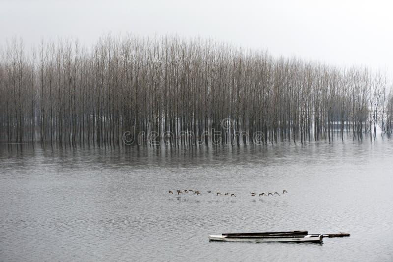 Rivierlandschap na sneeuw stock foto's