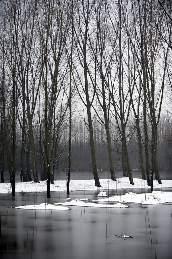 Rivierlandschap na sneeuw royalty-vrije stock foto's