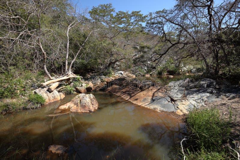 Rivierlandschap van Caatinga in Brazilië royalty-vrije stock fotografie