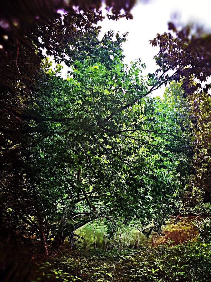 Riviermening door bomen royalty-vrije stock foto's