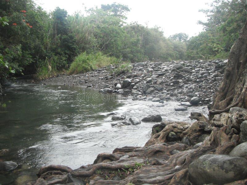 rivieroever royalty-vrije stock afbeeldingen