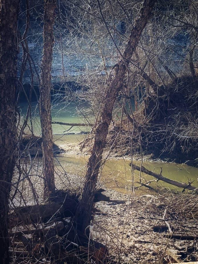 Rivieroever en bomen stock afbeelding