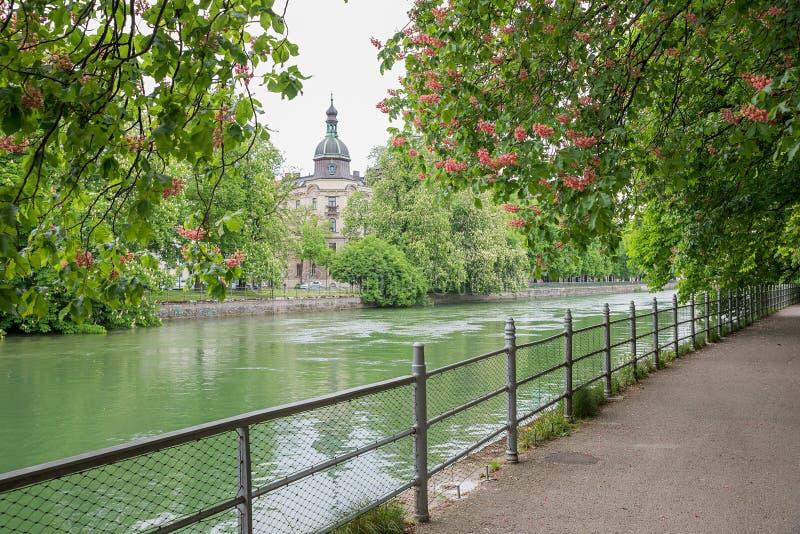 Rivieroever van isar rivier München, met bloeiende rode kastanjebomen royalty-vrije stock fotografie