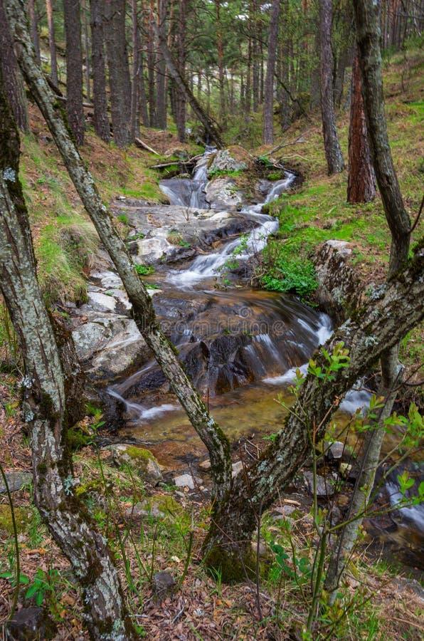 Rivierstroom die door het bos vloeien royalty-vrije stock foto