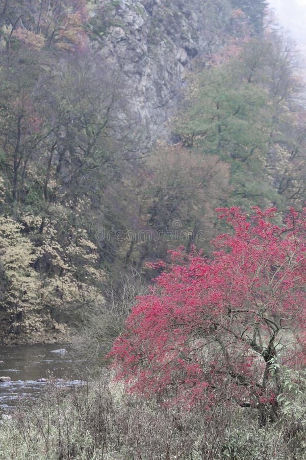 riviervallei Jihlava, Templstejn, Tsjechische Republiek stock foto's