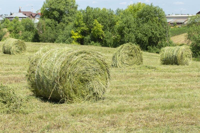 Rivoltando il fieno nella campagna Il grande giro annaspa del supporto del fieno su un campo di erba tagliata immagini stock