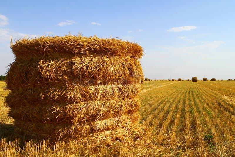 Rivolti il fieno il rotolo sul campo all'autunno a tempo di raccolta sui precedenti del cielo blu immagini stock libere da diritti
