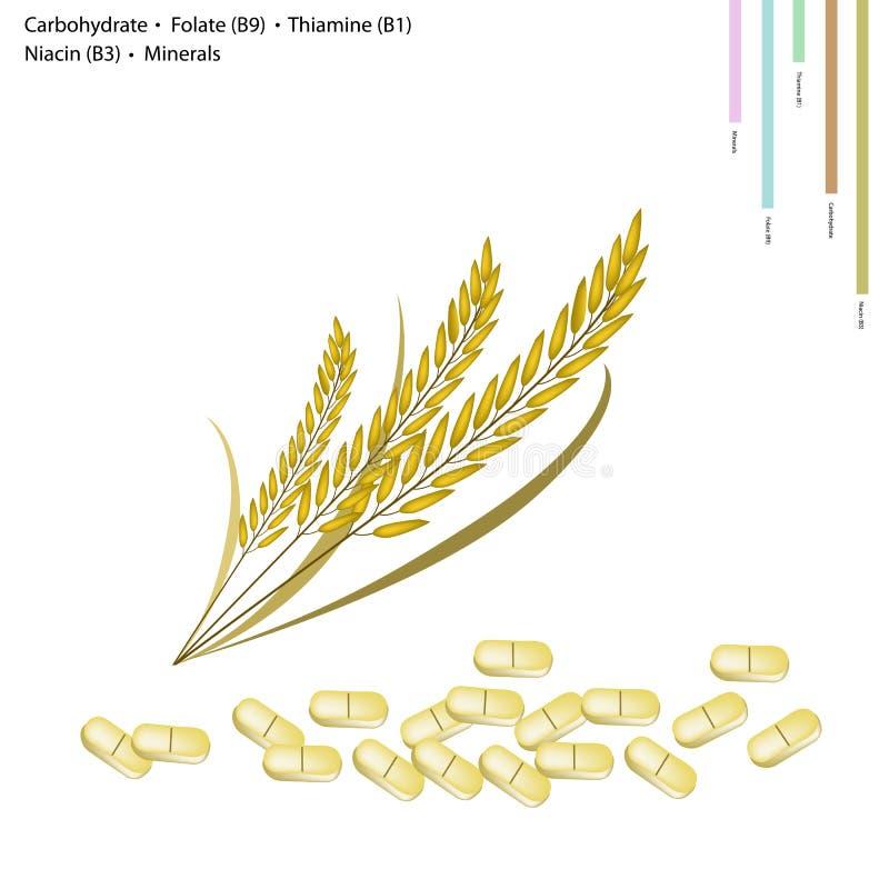 Riz avec de l'hydrate de carbone, la vitamine B9, le B1, le B3 et les minerais illustration de vecteur