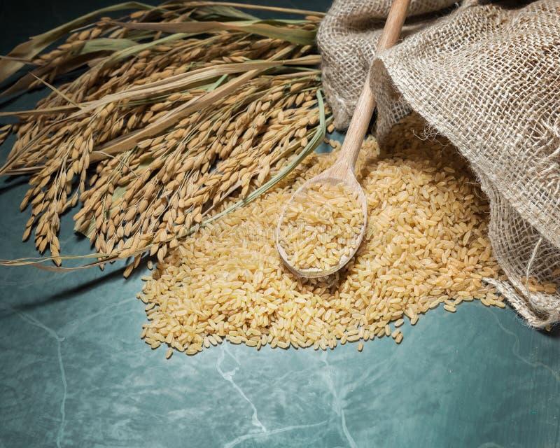 Riz brun et transitoire photo stock