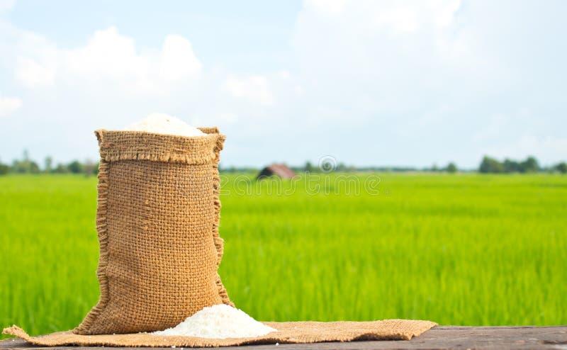 riz de jasmin image libre de droits