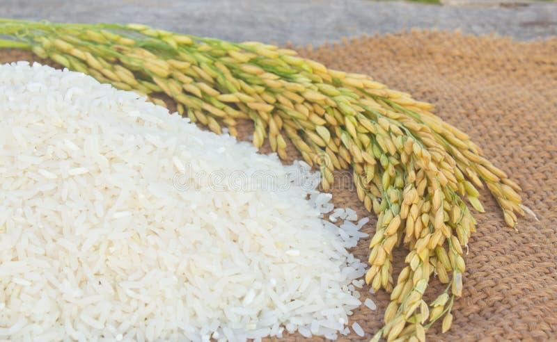 riz de jasmin photographie stock libre de droits