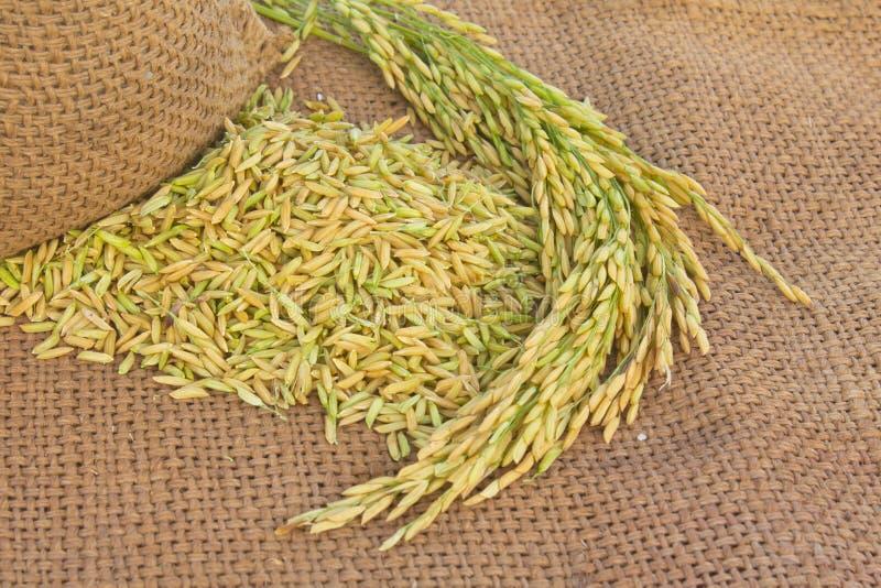 riz de jasmin images libres de droits