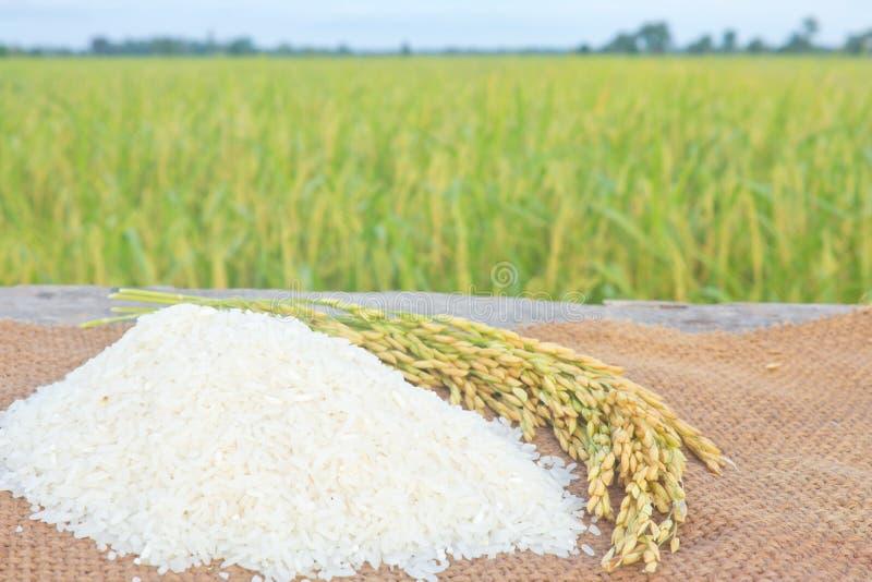 riz de jasmin photos libres de droits