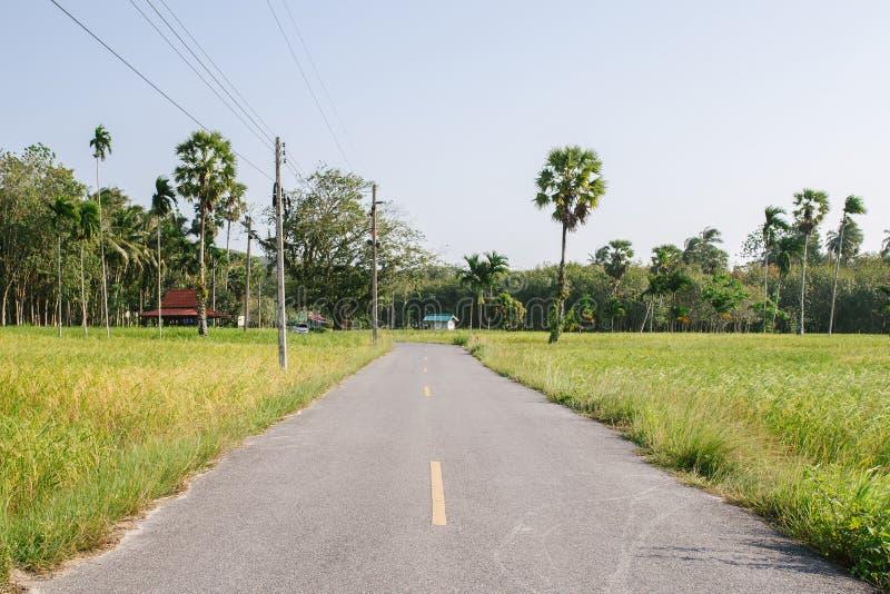 Riz non-décortiqué dans le domaine, Thaïlande, champ vert, coupe de route par le ¡ de fieldsภphotos libres de droits