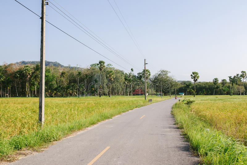 Riz non-décortiqué dans le domaine, Thaïlande, champ vert, coupe de route par le ¡ de fieldsภphotographie stock