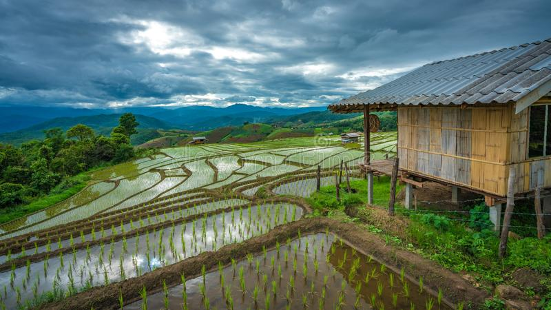 Riz Paddy Field Mountain View photographie stock
