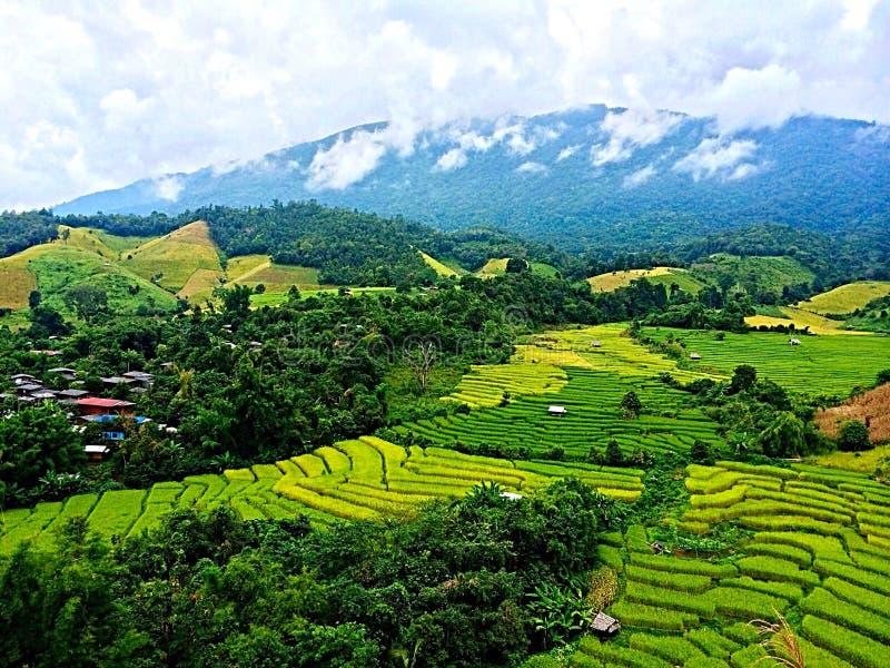 Riz thaïlandais Paddy Field image stock