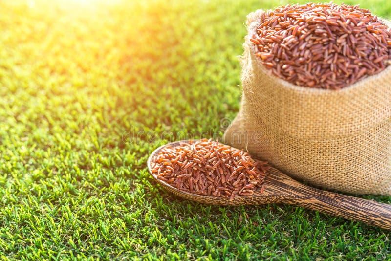 Riz thaïlandais rouge de jasmin dans la cuillère et le petit sac sur le CCB d'herbe verte photo stock