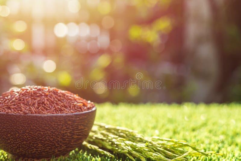Riz thaïlandais rouge de jasmin dans la cuvette foncée sur l'herbe verte avec la lumière du soleil images libres de droits