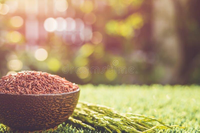 Riz thaïlandais rouge de jasmin dans la cuvette foncée sur l'herbe verte avec la lumière du soleil image libre de droits