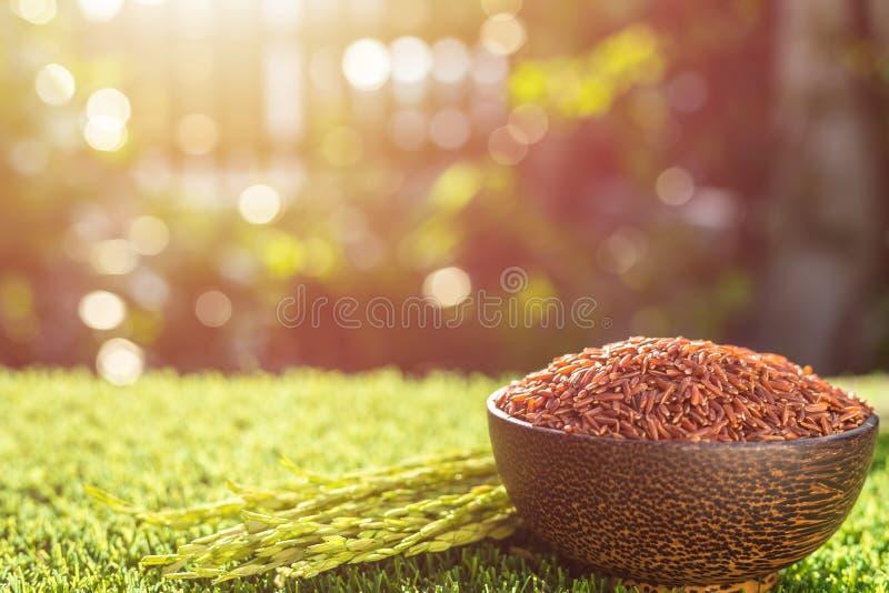 Riz thaïlandais rouge de jasmin dans la cuvette foncée sur l'herbe verte avec la lumière du soleil photos libres de droits