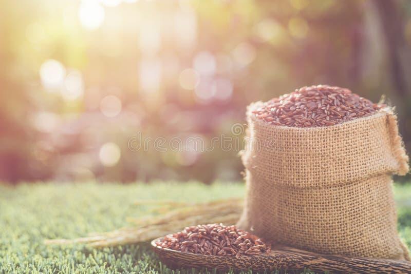 Riz thaïlandais rouge de jasmin dans le petit sac sur l'herbe verte avec la lumière du soleil photo stock